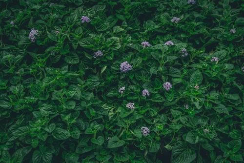 绿叶小花背景