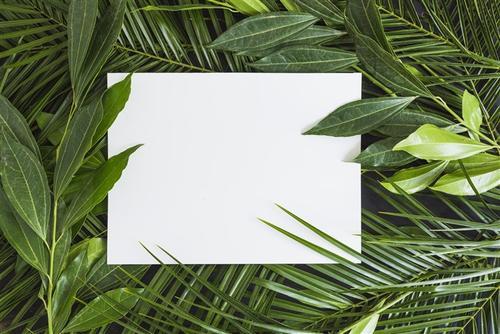 文艺风植物背景