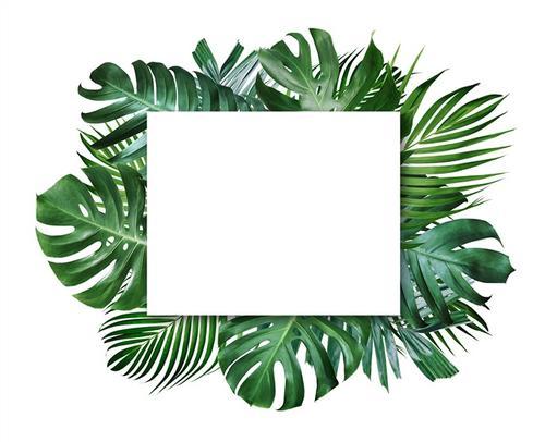 植物边框背景