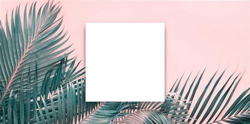 美式热带植物背景