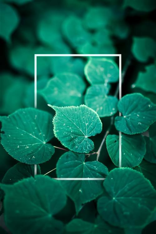 绿叶高清摄影图片