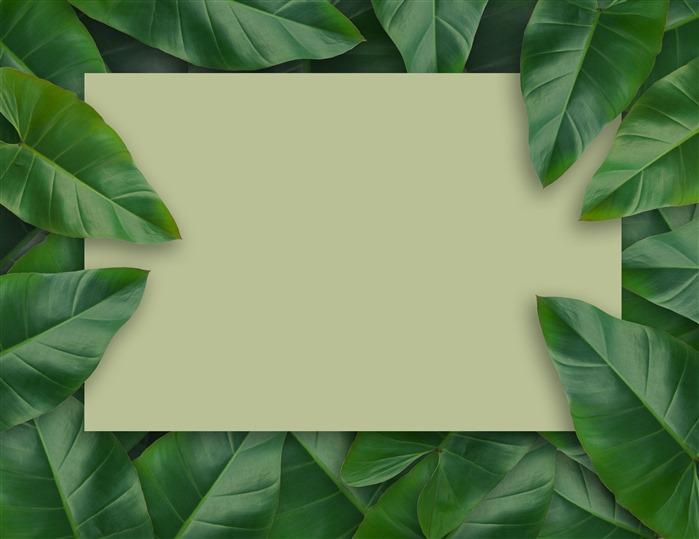清新绿植边框背景