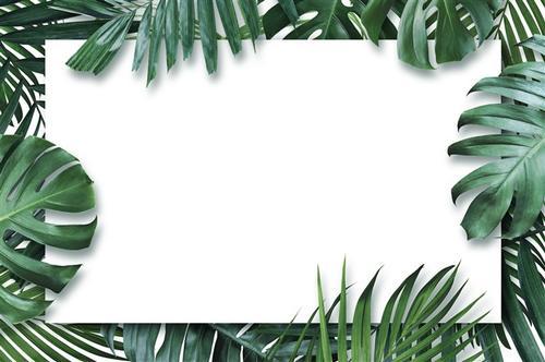 热带绿植背景