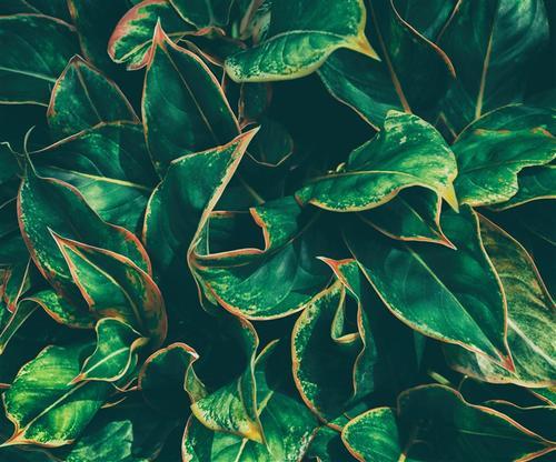欧美植物背景