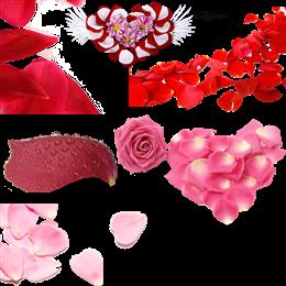 玫瑰花花瓣装饰图片