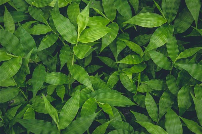 高清绿叶背景