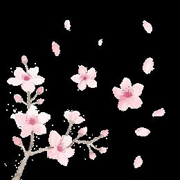 手绘桃花漂落图片