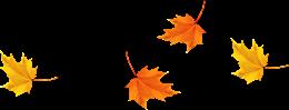 晚秋枫叶飘落图片