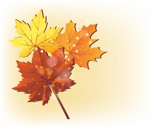 初冬泛黄枫叶矢量图图片