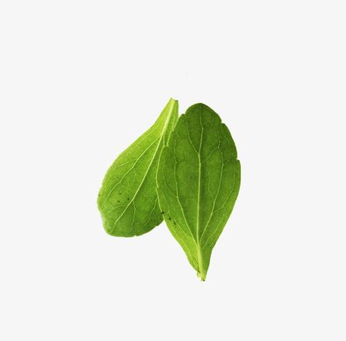 绿色菜叶矢量图