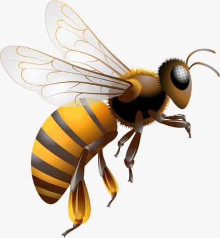 蜜蜂实拍图片