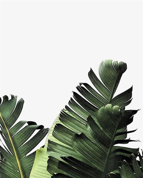 绿色棕榈叶矢量图