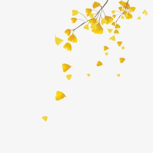 秋天银杏叶落叶图片