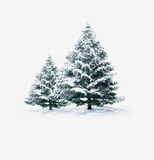 冬天雪树图片
