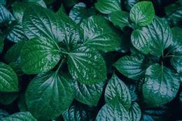 植物护眼壁纸
