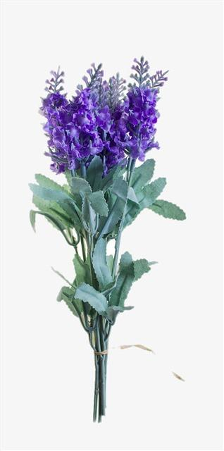 紫罗兰花卉花朵