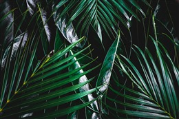 绿色桌面壁纸护眼