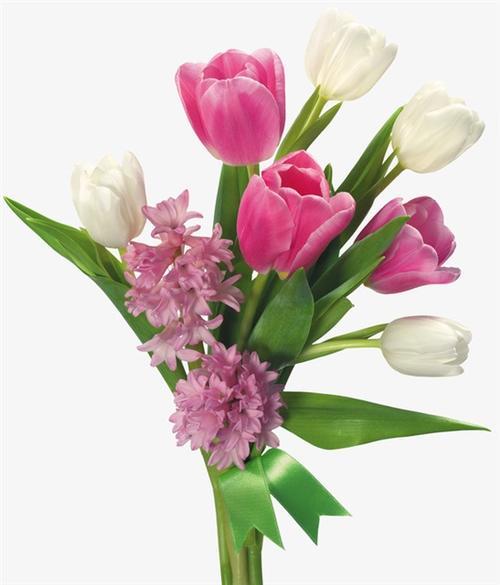 郁金香鲜花图片大全大图