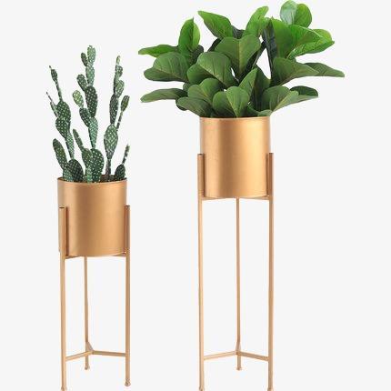 室内装饰植物盆栽