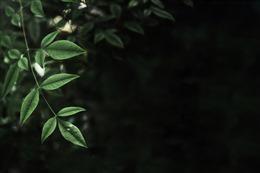 绿色植物ppt背景图片
