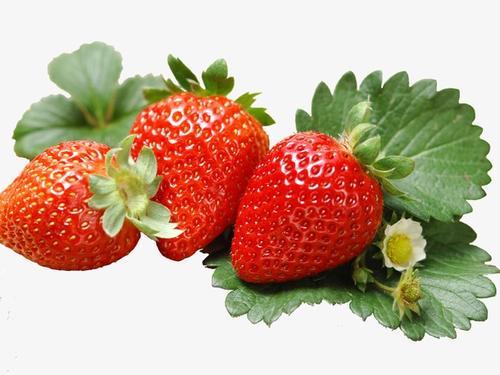 冬季奶油草莓