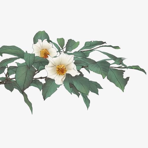 水墨绿色花卉图片