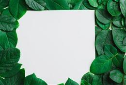 小清新绿叶背景图
