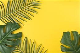 柠檬黄背景