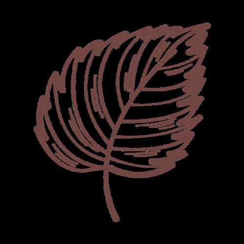 棕色树叶简笔画