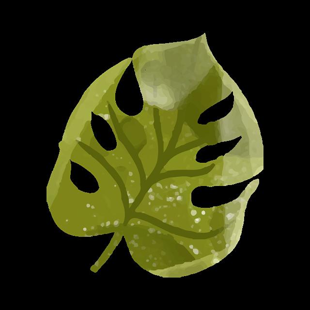 大自然树叶植物叶子元素