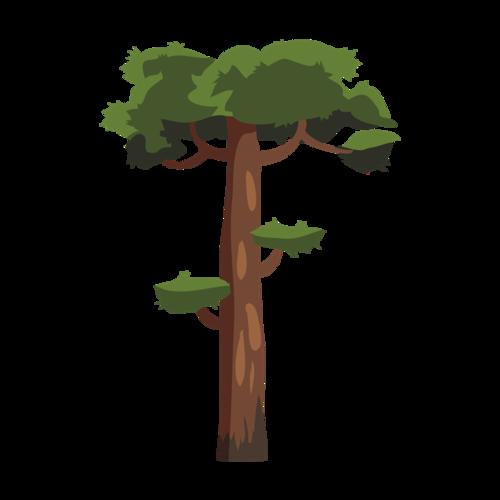 粗壮的参天大树