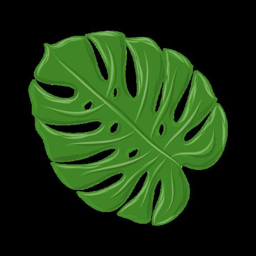 绿色树叶热带植物芭蕉叶