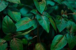 热带植物背景素材