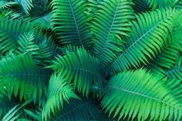 热带植物背景墙