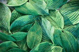 绿色植物背景唯美