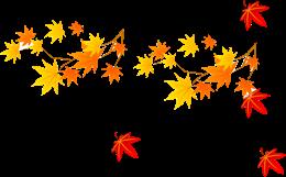 枫叶掉落图片