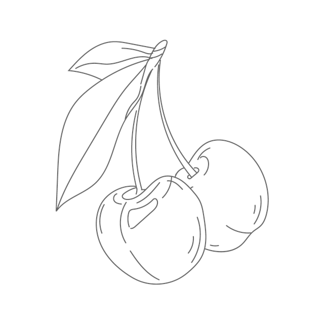 樱桃素描图片