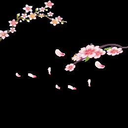唯美花枝花瓣图片