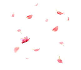 粉色花瓣飘落图片