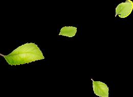 漂浮树叶素材
