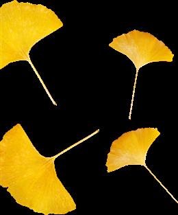 黄色银杏叶漂浮元素