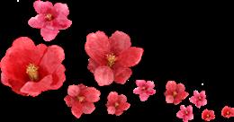 红色花朵漂浮素材