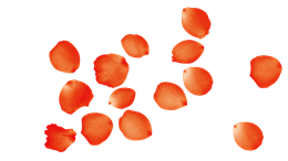 漂浮的红色花瓣