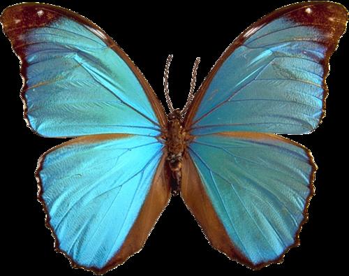 星空色蓝色蝴蝶