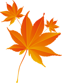 秋天枫叶装饰图案