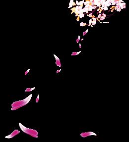 桃花花瓣飘落图片