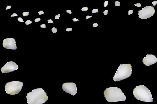 写实手绘白色花瓣