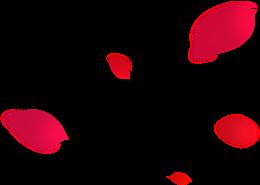 手绘漂浮的玫瑰花瓣图片