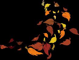 树叶飘落图片