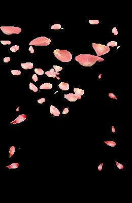 粉色玫瑰花瓣飘落图片